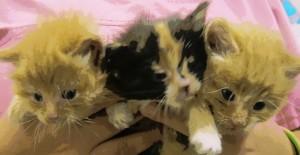abandoned kittens at Talbot Humane