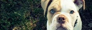 Bark in the Park - Talbot Humane