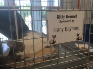 cat nap sponsor