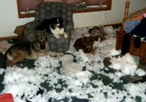 destructive dogs