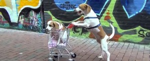 shopping dogs