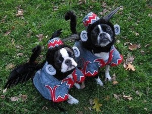costumed dogs have more fun!