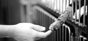 paws and hand