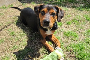 adopt penny