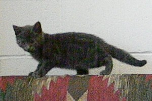 adopt sootie mcgee