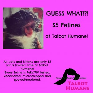 5 dollar felines at Talbot Humane