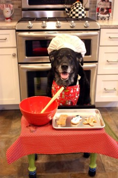 My-friends-dog-baking-Christmas-Cookies.